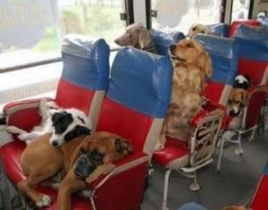 cani in partenza per le vacanze