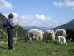 Messner pastore di yak