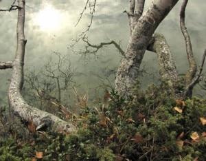 Betulle del Laghetto dei Campelli (maurizio)