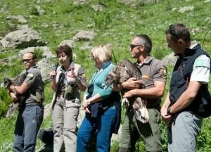 Il momento del rilascio dei due gipeti (Photo Parco delle Alpi Marittime)