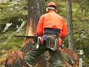Un boscaiolo al lavoro