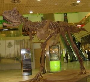 Carnotaurus sastrei, uno degli scheletri di dinosauro presenti alla mostra (Photo courtesy of  dinocasts.com)