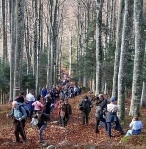 Manifestanti in cammino per la marcia n difesa della foresta del Cansiglio (Photo courtesy of http://mmedia.kataweb.it/foto/3621745)