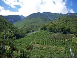 Agricoltura in montagna (Photo courtesy tr3ntino.it)