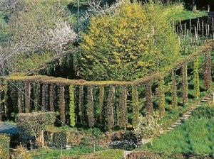Un-roccolo-Photo-LEco-di-Bergamo