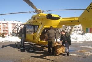 Cavalli foraggiati in elicottero