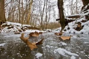 02_Foglie sul ghiaccio (Marco Caccia)