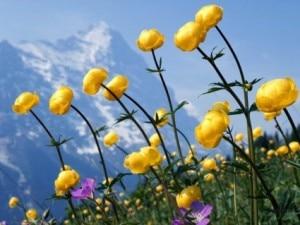 Scoppia la primavera in montagna (Photo courtesy Myecard.it)