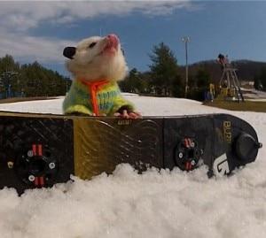 Ratatouille e il suo snowboard durante una pausa (Photo youtube/LibertyMountainPA)