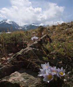 Biodiversita alpina (Photo courtesy summitcountyvoice.com)