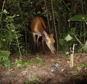 Un cervo immortalato da una delle fototrappole delle Oasi WWF (Photo WWF)
