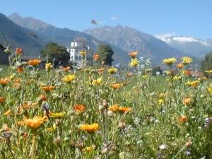Prati fioriti (Photo comune.aosta.it)