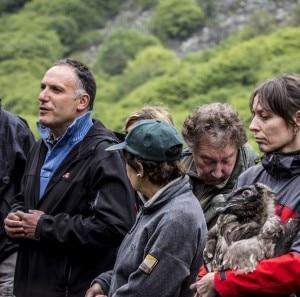Uno dei gipeti rilasciati (Photo courtesy of www.parcoalpimarittime.it)