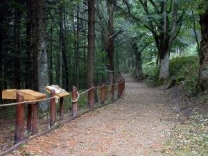 Uno dei sentieri dei boschi di Campigna (Photo courtesy of www.parks.it)