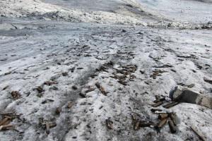 Numerose granate affiorano dal ghiaccio della Vedretta di Nardis (Photo courtesy of www.italiah24.it)