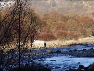 Un tratto dell'Avisio nei pressi di Tesero (Photo courtesy of www.flickr.com)