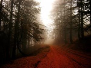 Nebbia sulle Alpi Liguri (Paolo Malvezzi)
