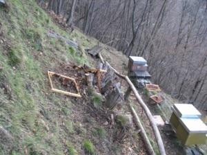 Photo of Orso in Valsassina: arnie depredate sui monti di Premana
