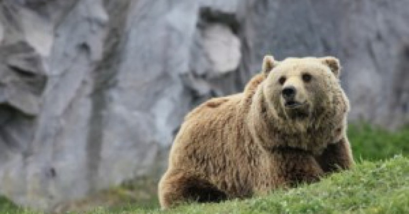 Orso-bruno-photo-courtesy-ecologiae.com_-300x199.jpg