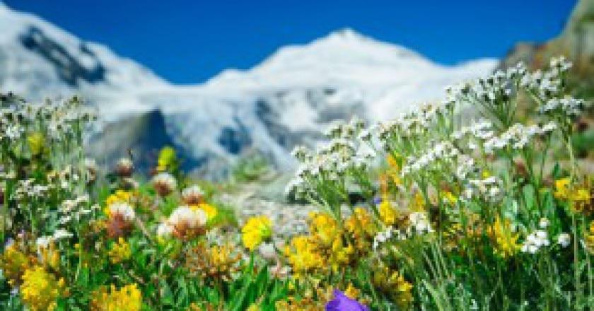 Primavera-sulle-alpi-Photo-courtesy-austrianzimmers.blogspot.com_-300x199.jpg