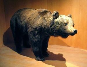 Photo of Orsi M12 e M14 in esposizione nei musei dell'Alto Adige