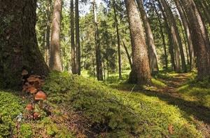 Photo of L'urlo degli alberi assetati: ascoltato per la prima volta a Grenoble