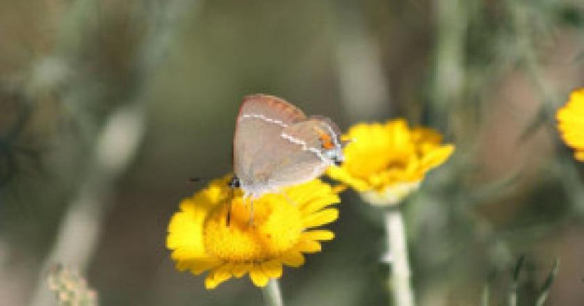 Farfalle-1-Antonietta-Di-Girolamo-300x200.jpg