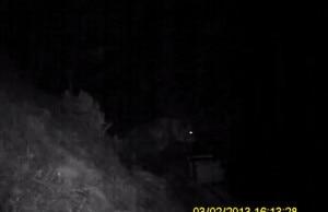 Photo of Dalla Valsassina l'orso è sceso fino a Lecco