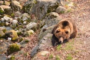"""Photo of """"Casa per l'Orso"""", una nuova oasi Wwf in Trentino"""