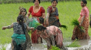 Farmers enjoy by splashing mud to each other while planting the sapling of paddy in their field. Photo: nepaltrekkingpass.com
