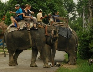 Tourists seated on the back of elephants by four and prepared for elephant safari in Chitwan National Park in Sauraha, Nepal. Photo: nepalmountainnews.com