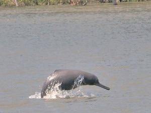 Dolphin file photo