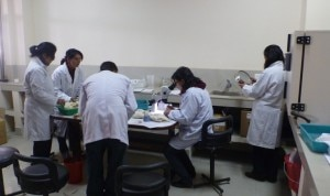 Scientists at Nepal Academy of Science and Technology (NAST) working on the seed preserved at the Himalayan Seed Bank established at NAST premises with technical assistance of EvK2CNR. Photo: Nepal Mountain Focus