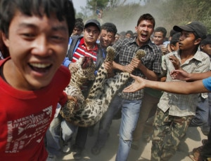 People parading leopard after killing it in retaliation in Capital Kathmandu, file photo, hungarypost.
