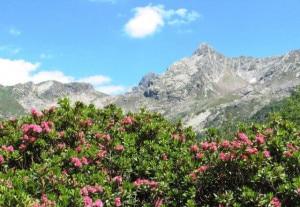 Paesaggio estivo (Pietro-Fazzini)