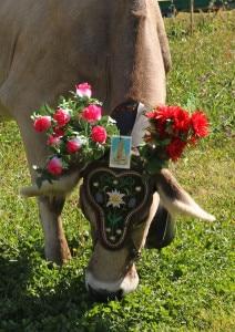 Festa della Transumanza, Aprica (Foto A. Stefanini)