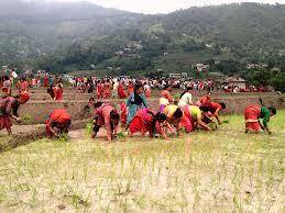 A file photo of Nepali farmers working in their field.