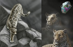 Panthera_blytheae