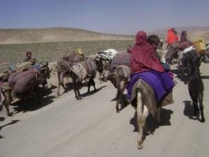 Seasonal migration in Himalaya region. Photo: ICIMOD