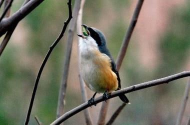 bird-himali-bhadrai.jpg