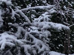 Photo of Fiocchi bianchi sulle Alpi: ma le forti nevicate sono attese per sabato
