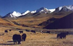 Photo of Free Tibet issues many hinder tourism entrepreneurs' plan to make hay with new policy