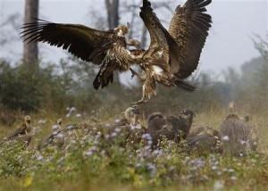 Vulture-restaurant-300x214.jpg