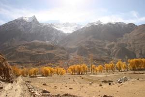 Photo of Intervista all'esperto: salvare le foreste del Karakorum per salvare le popolazioni