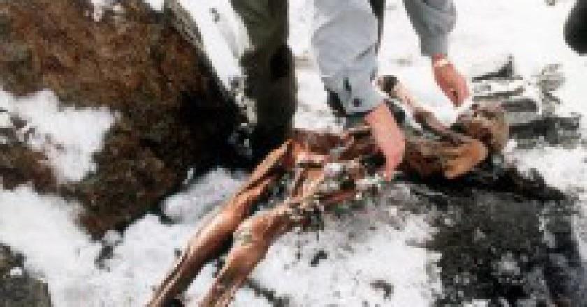 Mummia_uomo_del_Similaun_sulle_Alpi_italiane_1991-219x300.jpg