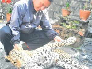 leopard-killed-300x225.jpg