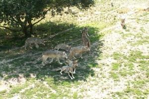 Photo of Pasqua da Lupi e da Orsi nel Parco Nazionale d'Abruzzo