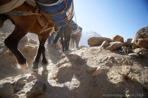 Photo of K2: portare tutto il necessario per vivere sul ghiacciaio