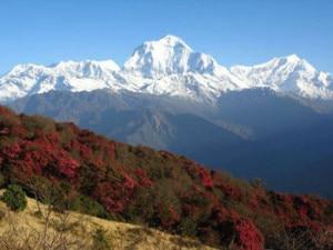 ghorepani-poon-hill-trek-300x225.jpg