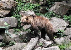 """Photo of L'orso """"dannoso"""" potrà essere abbatuto, la delibera trentina che fa discutere"""